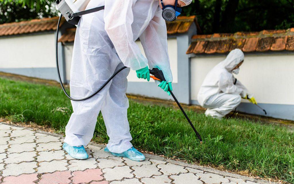 شركة مكافحة حشرات فى دبي