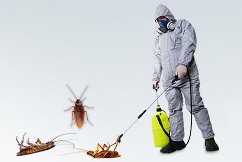 مكافحة الحشرات الشارقة