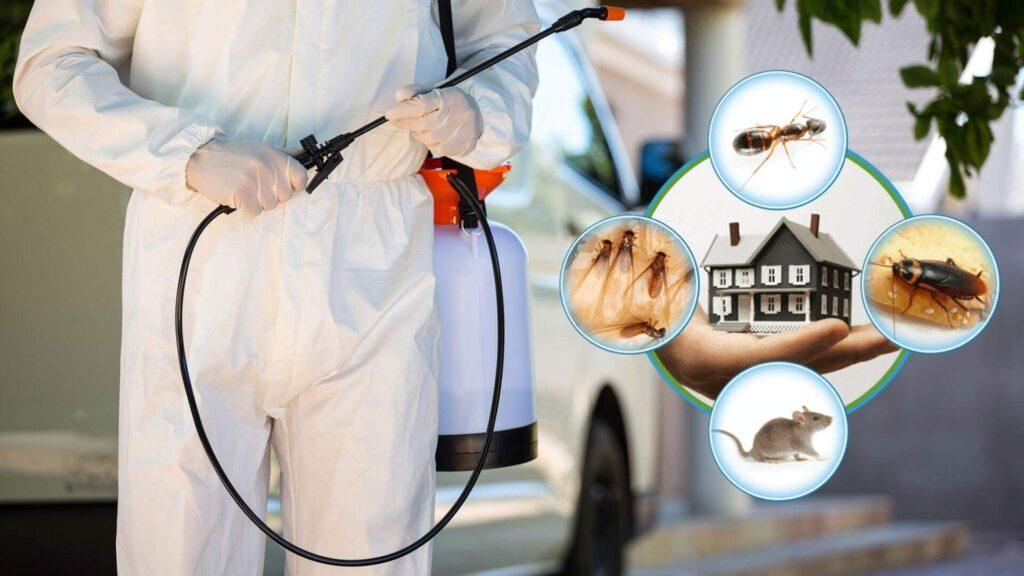 Pest control in Dubai