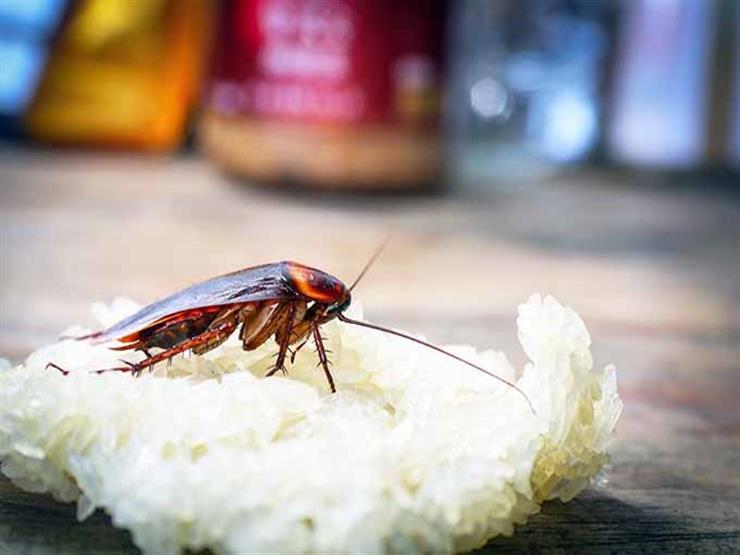 مكافحة الحشرات الاول