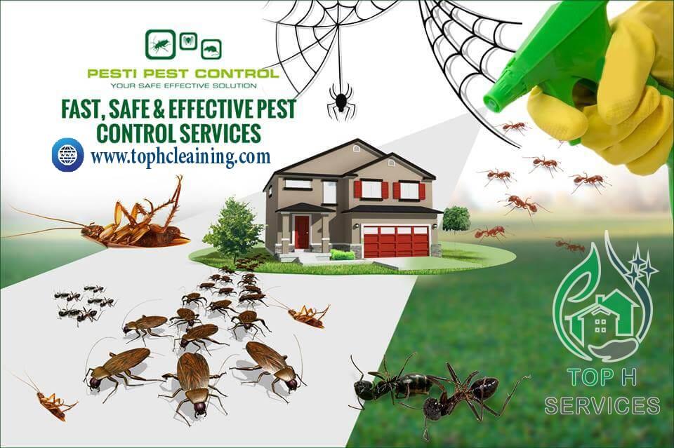 مكافحة الحشرات راس الخيمة