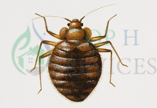 bed bug control in ajman
