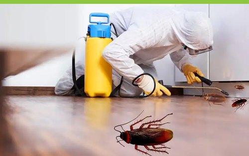 pest control11